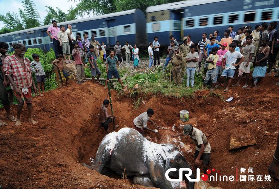 印度大象觅食与火车相撞