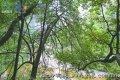 云台山 物种基因库465种动植物列入保护名录(组图)