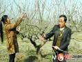 光山:数千亩桃林带领贫困户脱贫致富