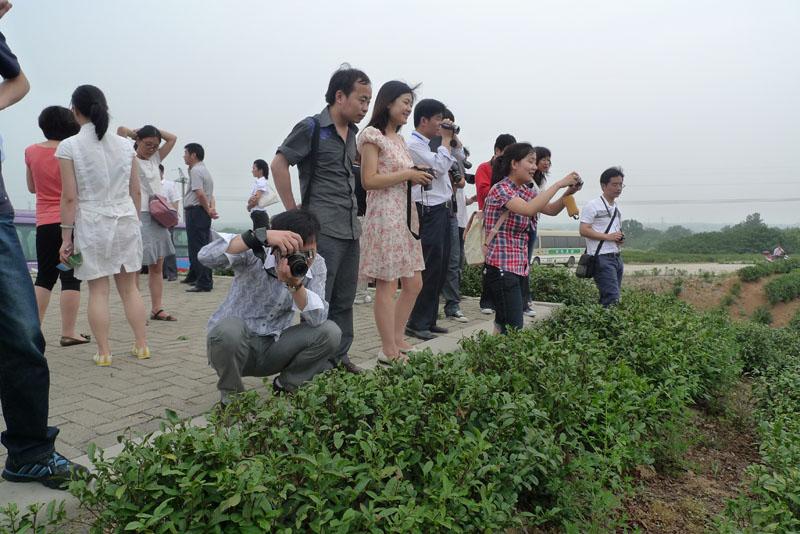 信阳平桥万亩生态茶园