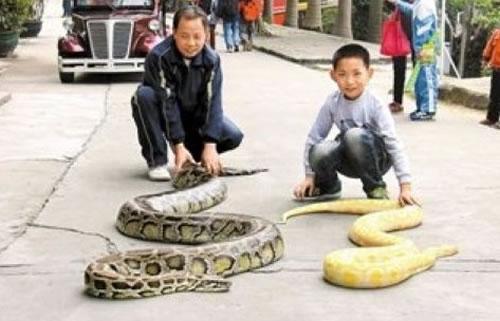蛇总是给人一种神秘感和恐惧感,但喜欢蛇的人却对他们疼爱有加,许多与蛇有关的景点,爱蛇的人一定要看一看。