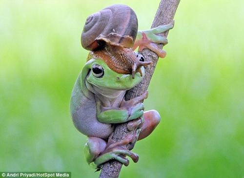 """""""澳洲树蛙""""头顶小蜗牛似法式贝雷帽"""