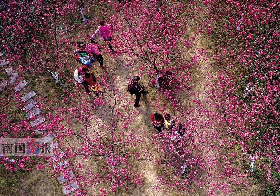 """高清组图:柳州赏花地图 周末和春天来个""""艳遇"""""""