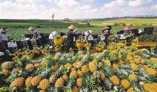 联合国发出预警!全球农业仍不可忽视,中国推动农业关键改革!