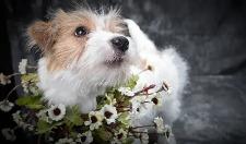 英国兽医为帮助畸形小狗,成功进行世界首例切除生殖器手术